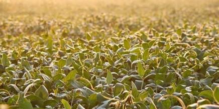 Gen HB4: la tecnología detrás de la soja